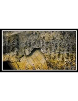 Nos Visuels - 127 1-LITERATTURE ANCIENNE